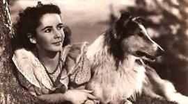 Liz Taylor: O legenda si cainii din viata ei