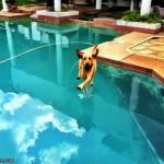 Apa prea calma 150x150 Fotografii amuzante cu caini