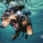 Sos picant 150x150 Fotografii amuzante cu caini
