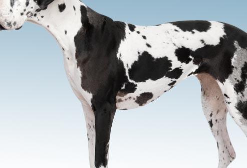 25 cele mai populare rase de caini si problemele lor de sanatate