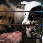 Primul adapost de caini si animale abandonate se deschide la Cernavoda