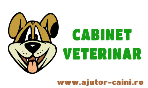 Cabinete veterinare Bucuresti: FalconVet
