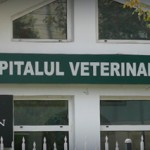 Salvanim - Spital veterinar Iasi