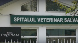 Salvanim – Spital veterinar Iasi