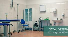 Marcovet – spital veterinar Bucuresti