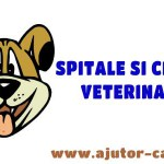 spitale si clinici veterinare featured