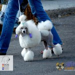 Euro Dog Show 2012 Romania [GALERIE FOTO]