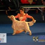 Euro Dog Show 2012 - ziua II