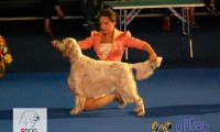 Euro Dog Show 2012 &#8211; ziua II