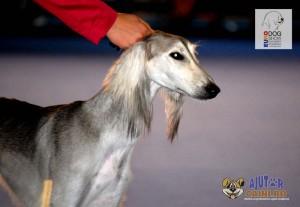 Barzoi Rusesc Euro Dog Show 2012 Romania