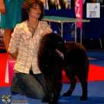 Ciobanesc Romanesc Corb European Dog Show 2012 Best Puppy of the Day