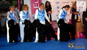 Black Russian Schnauzer European Dog Show 2012 Grupurile de crestere
