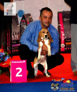 Beagle Best Puppy of the Day Euro Dog Show 2012 Romania