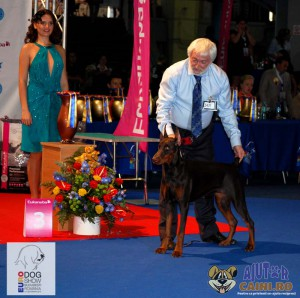 Doberman Best Puppy of the Day Euro Dog Show 2012 Romania