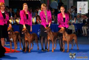 Rhodesian Ridgeback Euro Dog Show 2012 Romania