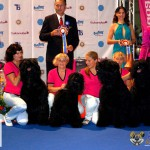 Black Russian Terrier Euro Dog Show 2012 Romania