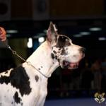 Euro Dog Show Romania