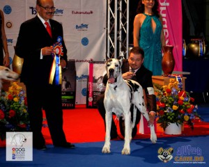 Dog German Arlechin Euro Dog Show 2012 Romania