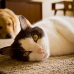 Cainii si pisicile traiesc MAI MULT decat acum 10 ani | STUDIU