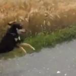 caine fericit video amuzant caini