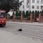 Caine vs. tramvai - video amuzant caini