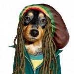 Animale costumate - caine Bob Marley