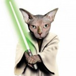 Animale costumate - pisica Yoda