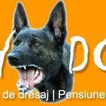 Scoala de dresaj Fly Dogs - Sibiu