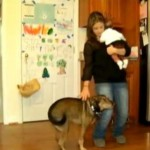 Cainele erou. Un copil de noua saptamani a fost salvat de la moarte de catelul familiei - VIDEO