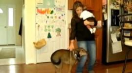 Cainele erou. Un copil de noua saptamani a fost salvat de la moarte de catelul familiei – VIDEO
