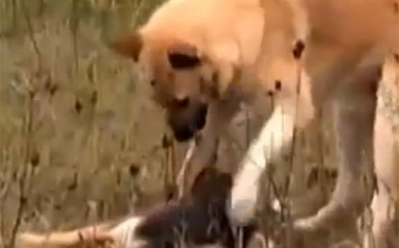 Gestul unui caine ii emotioneaza pe oameni – VIDEO