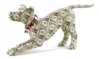 Top 11 cele mai scumpe rase de caini