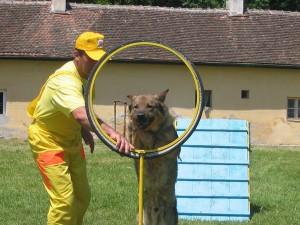 Scoala de dresaj canin Dog's World, Craiova
