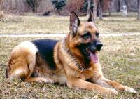 Academia de dresaj canin Gundo