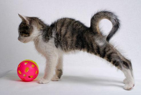 20 de lucruri pe care le poti invata de la caine sau pisica