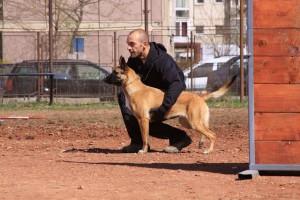 Scoala de dresaj Dogmaster