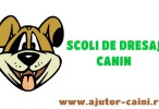 Scoli de dresaj: Scoala de dresaj Dog&#8217;s World, Craiova