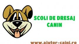 Scoli de dresaj: Scoala de dresaj Dog's World, Craiova