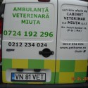 Veterinary Emergency Services in Bucharest- Ambulanta Veterinara Miuta Bucuresti