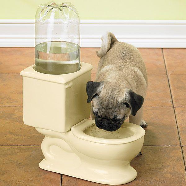 De ce beau cainii din WC