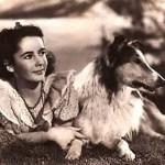 elizabeth taylor si lassie