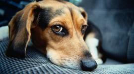 25 cele mai populare rase de caini si problemele lor de sanatate – partea I