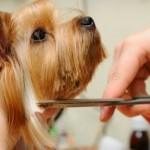 cosmetica si coafura canina