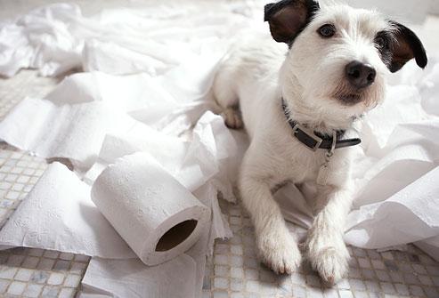 Top 12 probleme de comportament la caini
