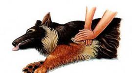 Manevra Heimlich pentru caini