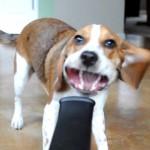 beagle vs pompa de aer vieo