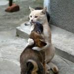 Orice caine ar trebui sa-si ia o pisica