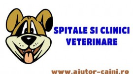 Clinici veterinare Arad: Clinvet – Clinica de animale mici