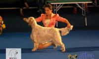 Euro Dog Show 2012 – ziua II
