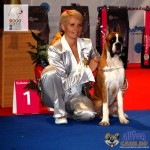 Boxer German Best Puppy of the Day Euro Dog Show 2012 Romania